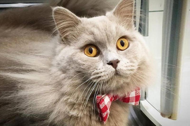 cat-in-berlin