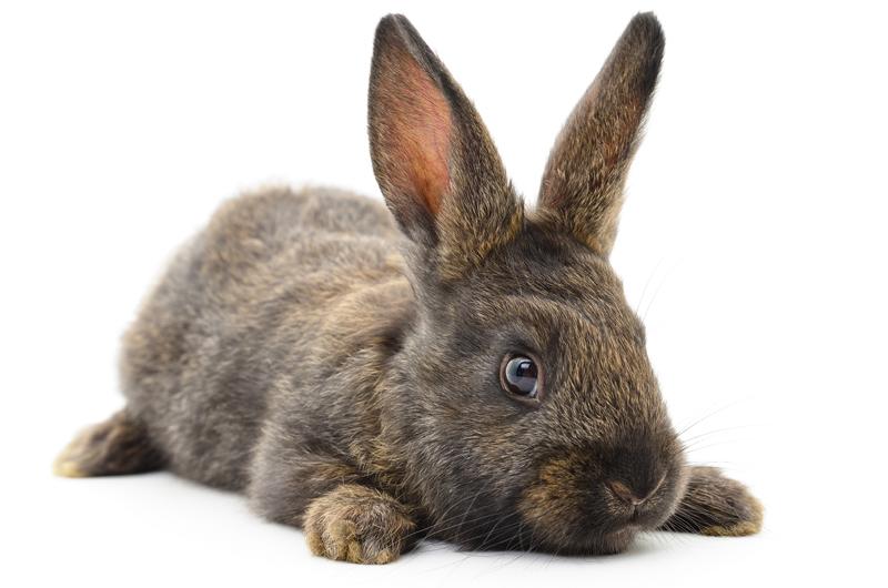 Journée internationale du lapin, faisons lui honneur !