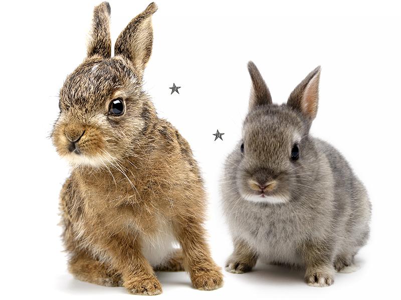 6 points essentiels pour bien s'occuper d'un lapin !