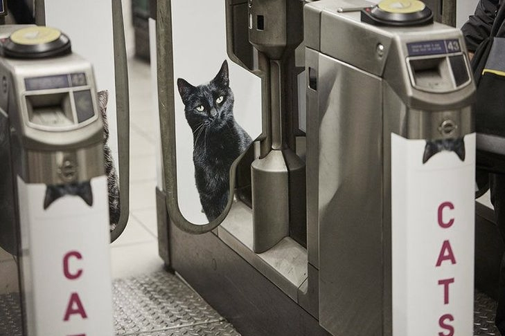 station-metro-londre-chat-03