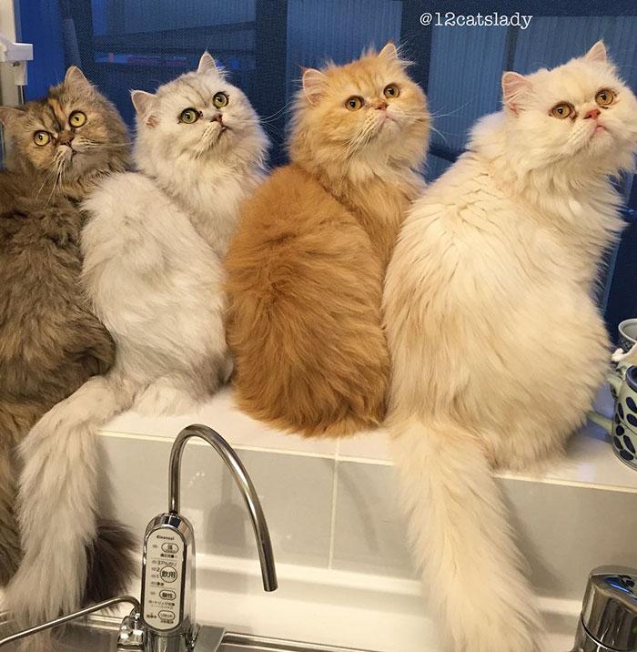 femme aux 12 chats