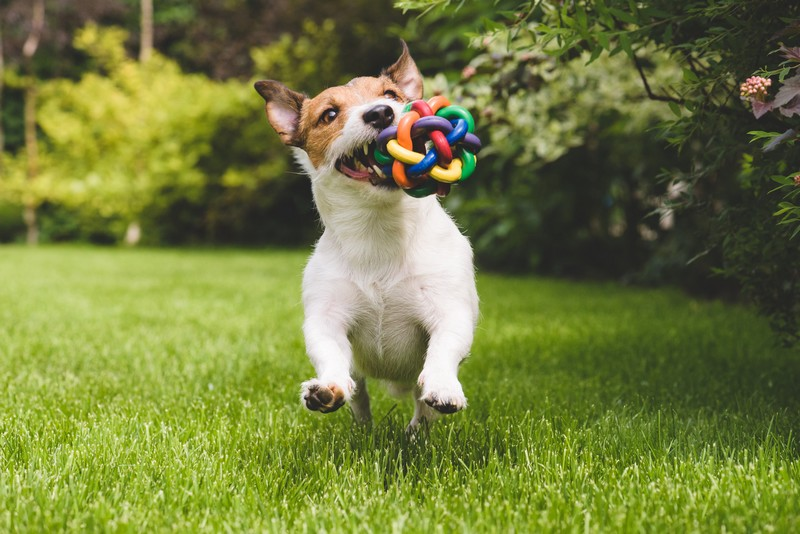 adopter un petit chien