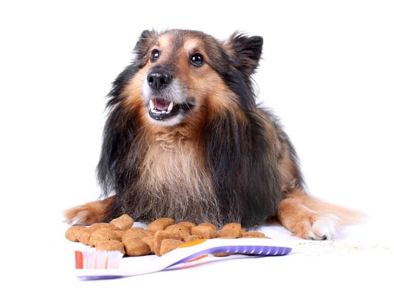 Conseils Véto : préservez l'hygiène bucco-dentaire du chien