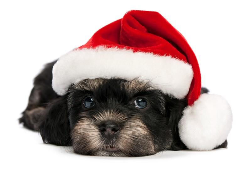 concours photos Noël