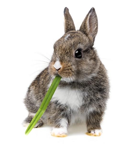 Comment nourrir un lapin sainement ?