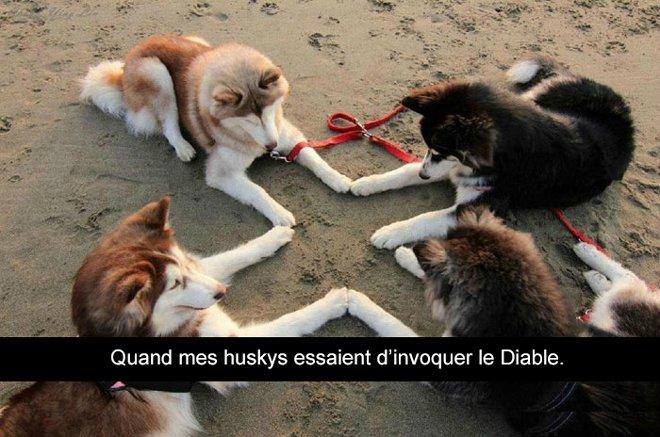 photos de Husky