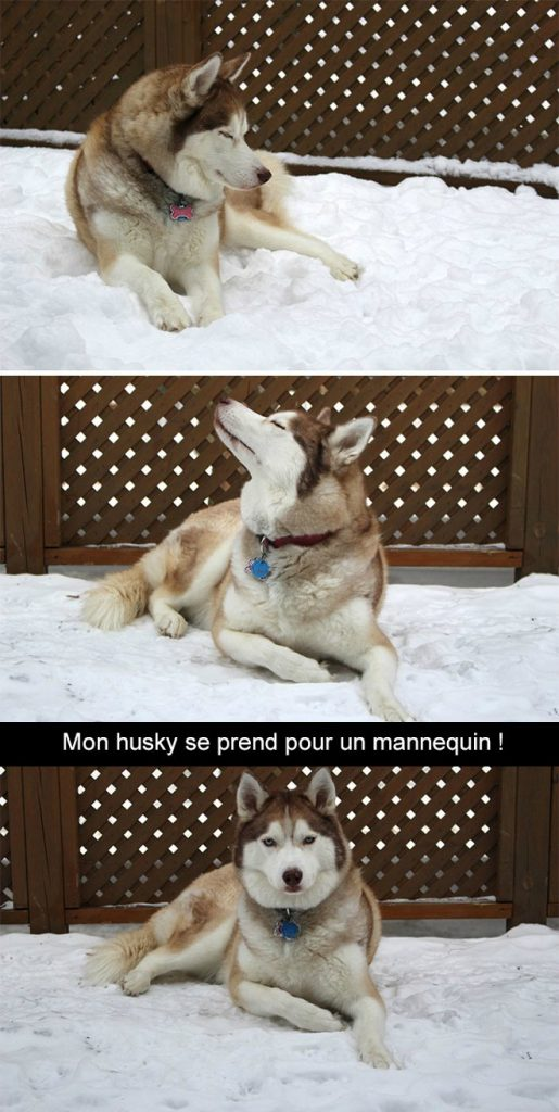 photo-husky-9