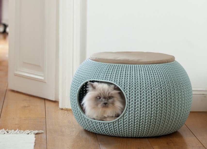 cozy pet home avec chat