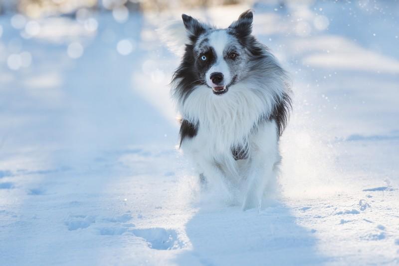 Gérez la mue du chien avec nos conseils simples à