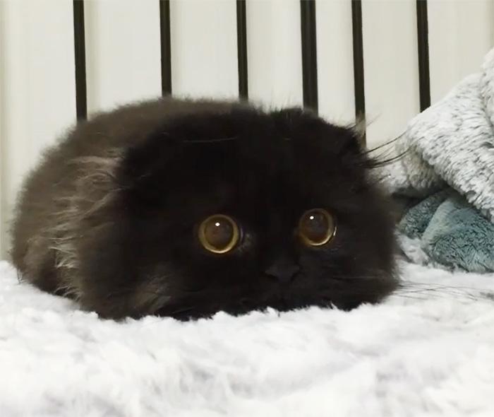 photos de chat mignon 1