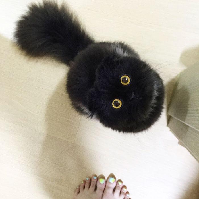 photos de chat mignon 2