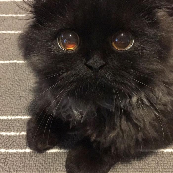 photos de chat mignon 3