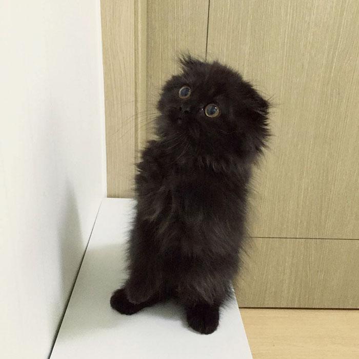 photos de chat mignon 4