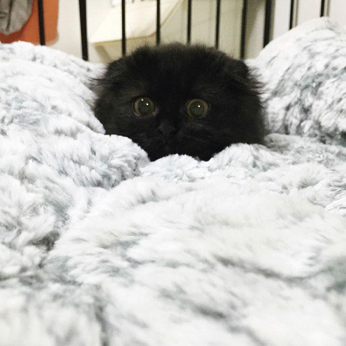 photos de chat mignon 5