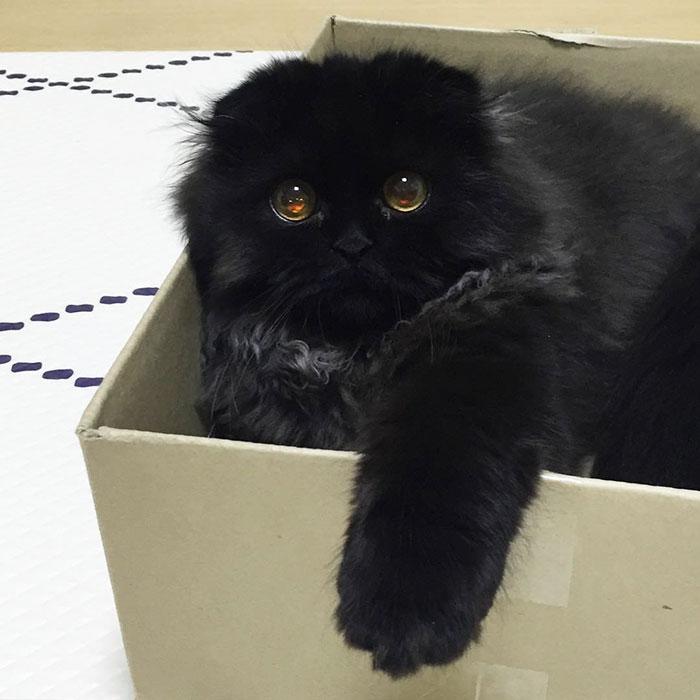 photos de chat mignon 6