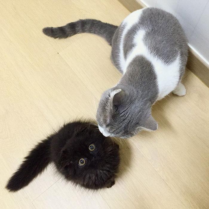 photos de chat mignon 8