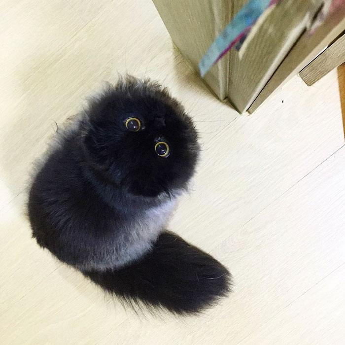 photos de chat migon 7