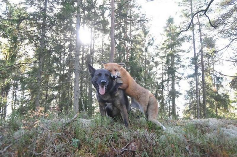 amitié improbable animaux 14