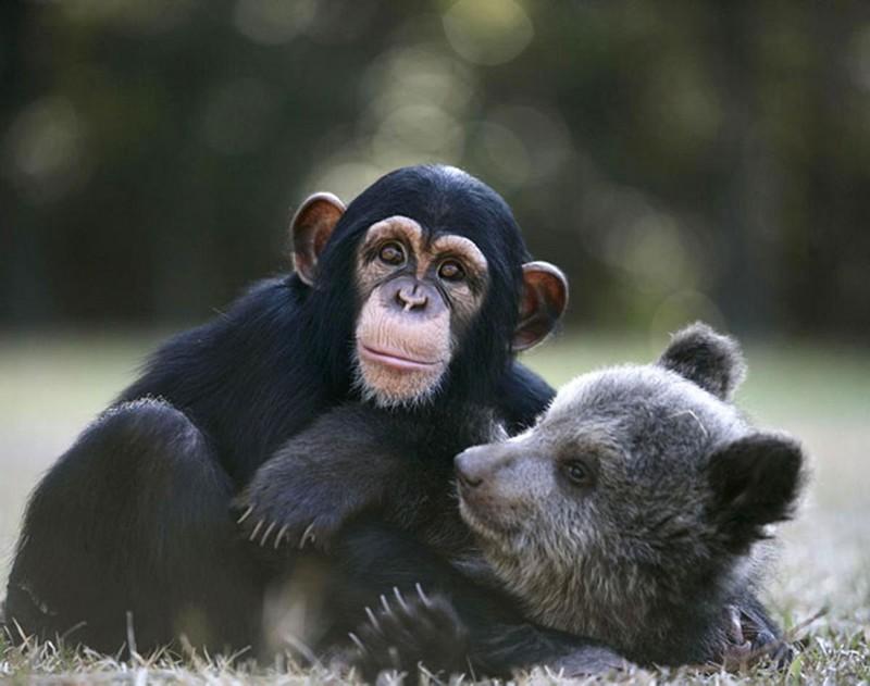 amitié improbable animaux 2