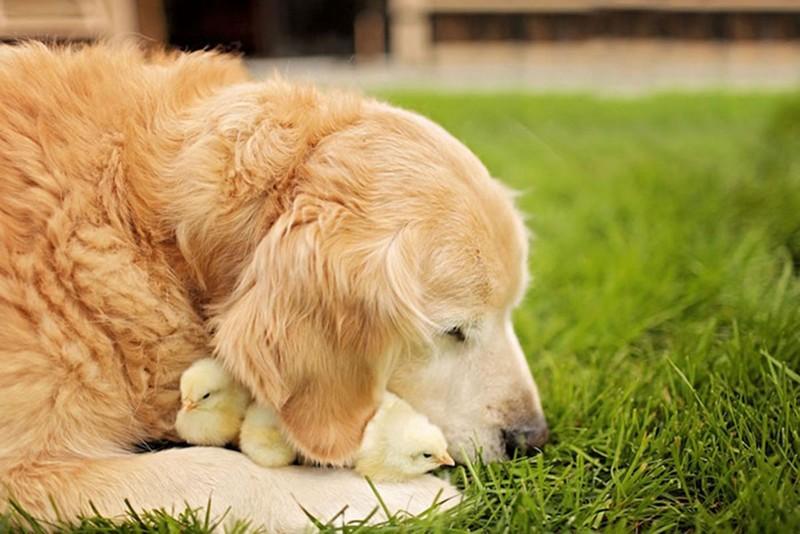amitié improbable animaux 3