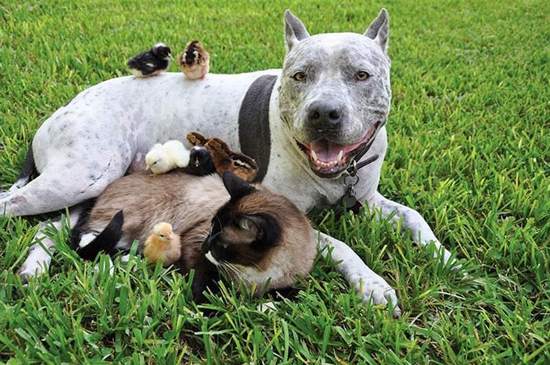 15 photos d'amitiés improbables entre animaux qui vous feront fondre !