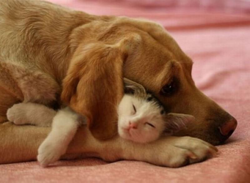 amitié improbable animaux 9