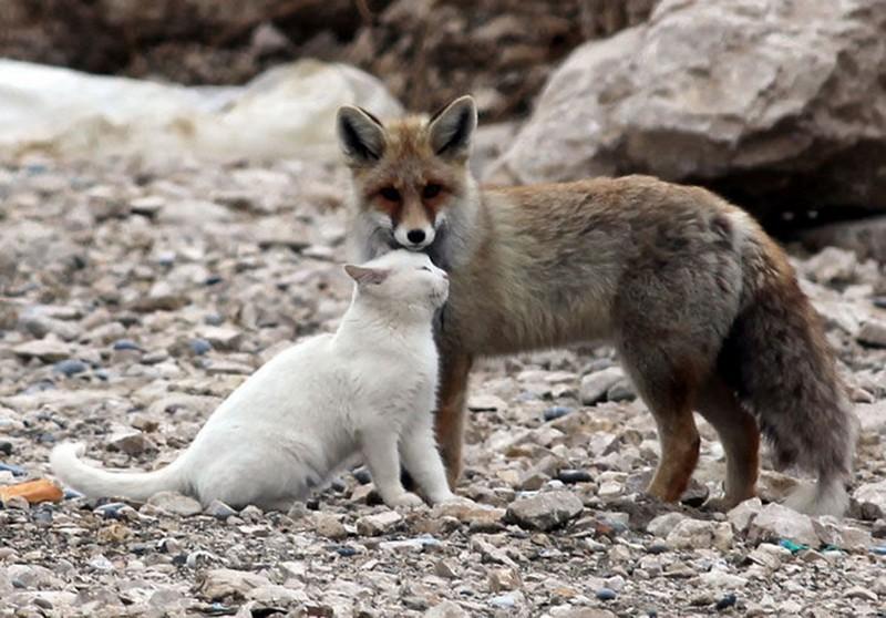 amitié improbable animaux