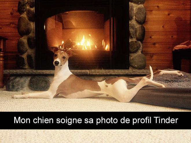 15 photos Snap de chiens prises dans une drôle situation !