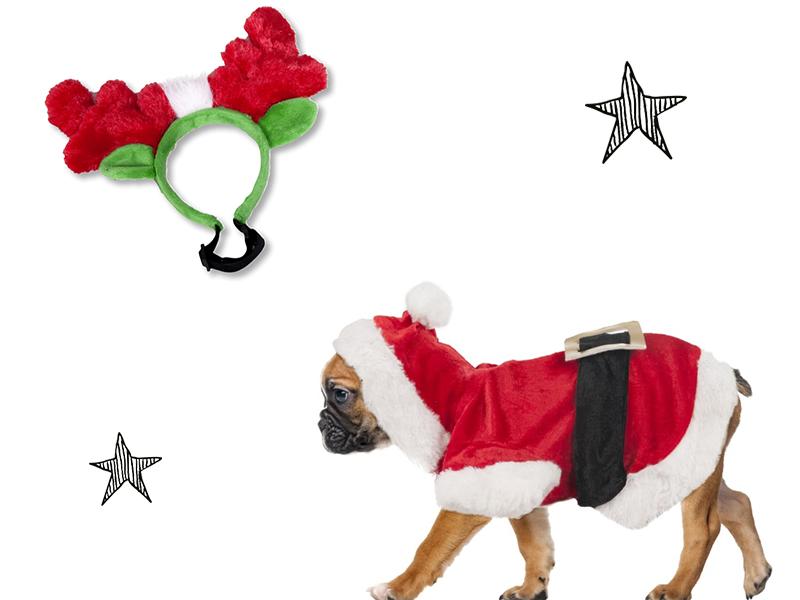 Cadeaux pour chien : une tenue de Noël
