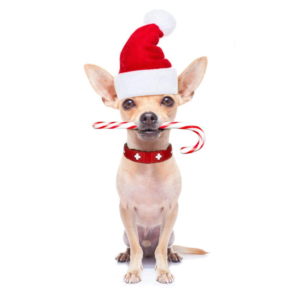 8 idées de cadeaux à offrir à votre chien pour Noël !