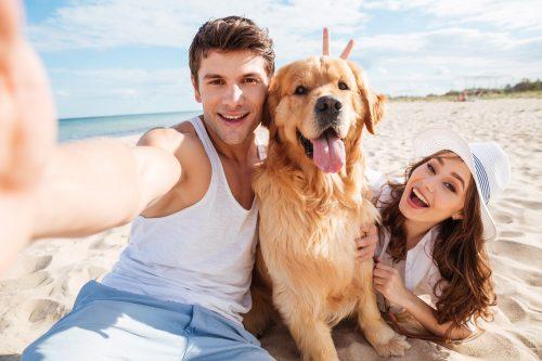 plage avec votre chien