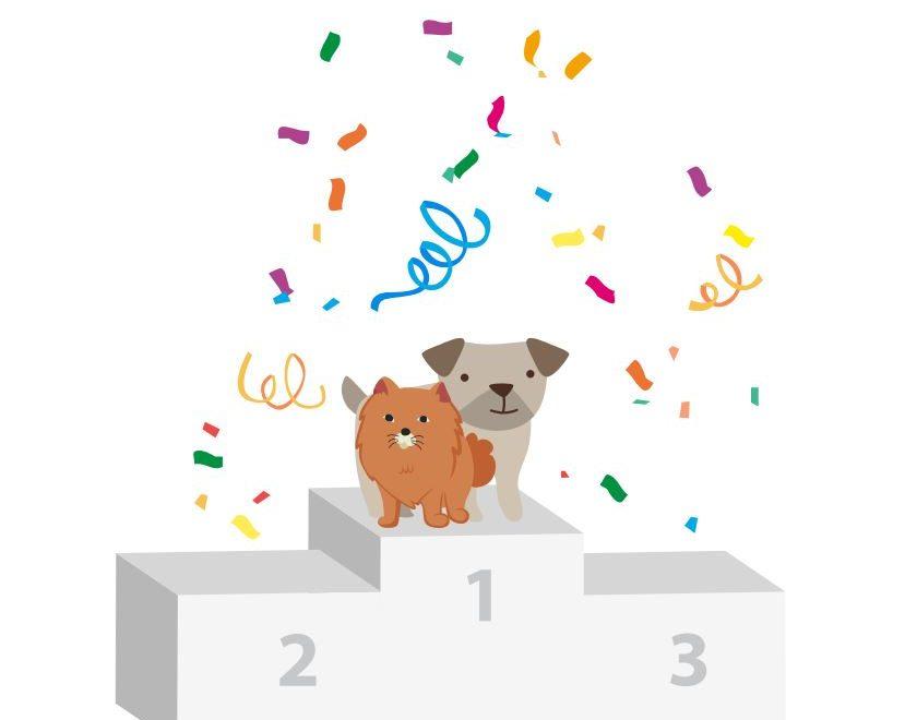 classement prénoms chiens et chats 2018