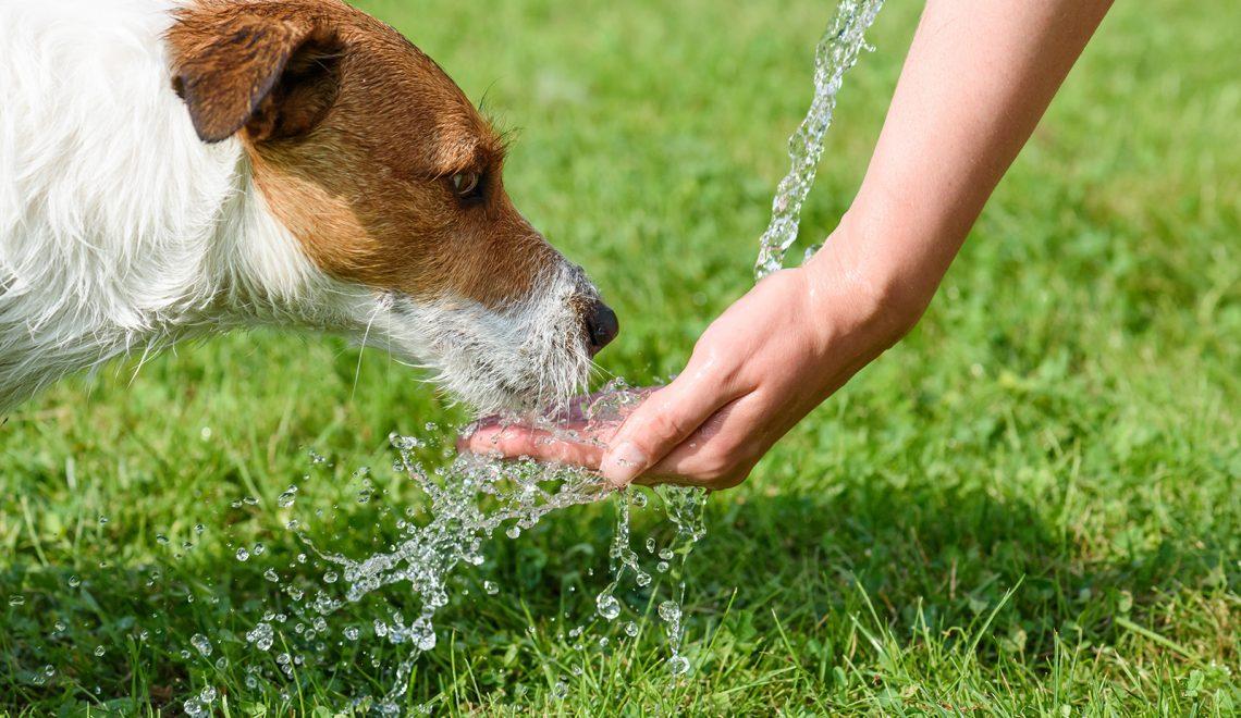 Idées pour rafraîchir son chien en été