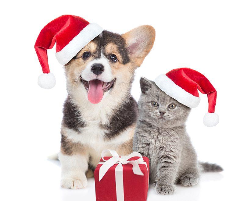 6 idées de cadeaux pour chats et chiens spécial Noël  !
