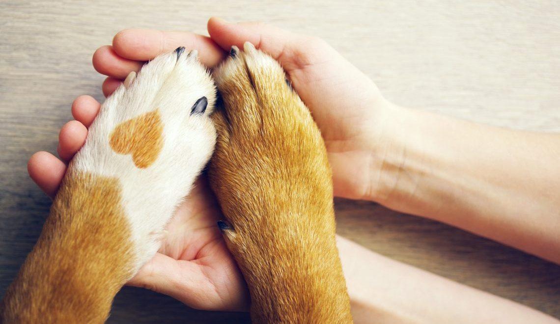 5 conseils pour votre animal de compagnie durant le confinement !