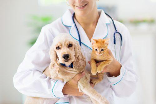 Animaux de compagnie et vétérinaire
