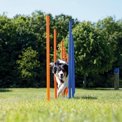 agility jeu pour chien