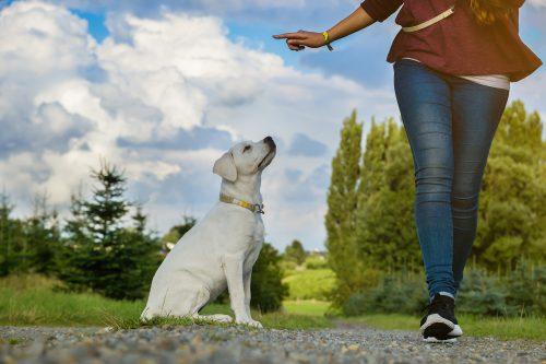 Application dressage du chien