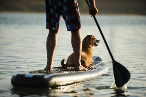 activités sur l'eau avec votre chien