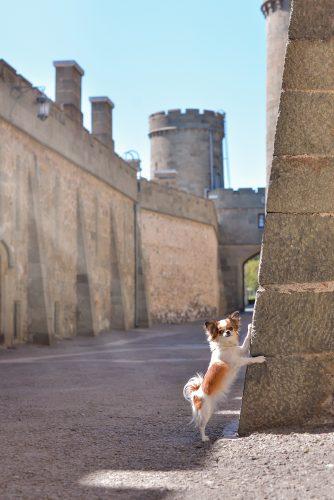 visite de château avec votre chien