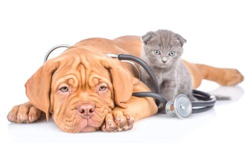 Applications santé chien et chat