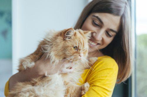 Adoption dans un bar à chat